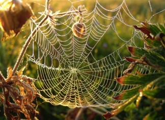 Spider Web fiber, Close-up Engineering, Credits: 1.bp.blogspot.com/