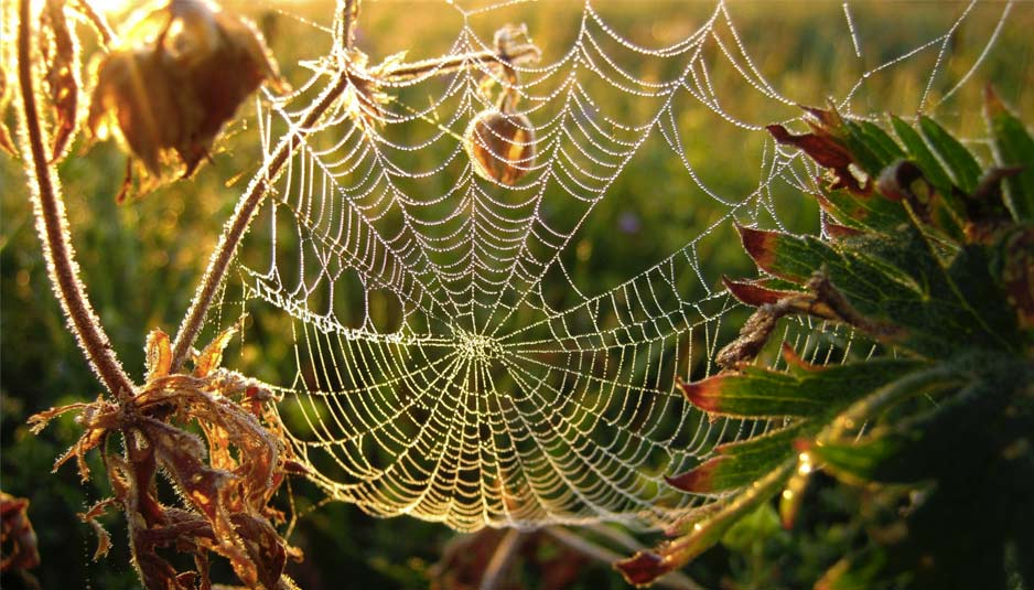 https://buildingcue.it/wp-content/uploads/2015/11/spider-web-fiber-natural-close-up-engineering1.jpg