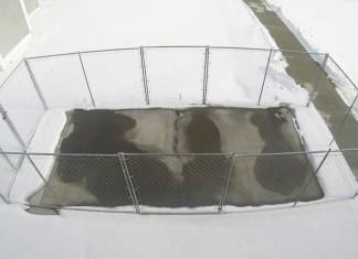 L'asflato che scioglie il ghiaccio
