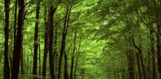 La foresta di Mercadante