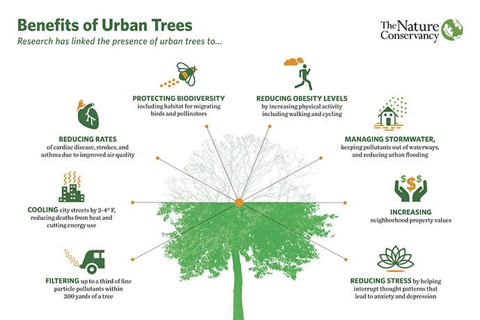 Piantare alberi può ridurre il calore delle nostre città?