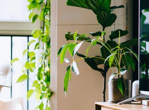 Interior design ecosostenibile, l'abitare diventa sempre più green