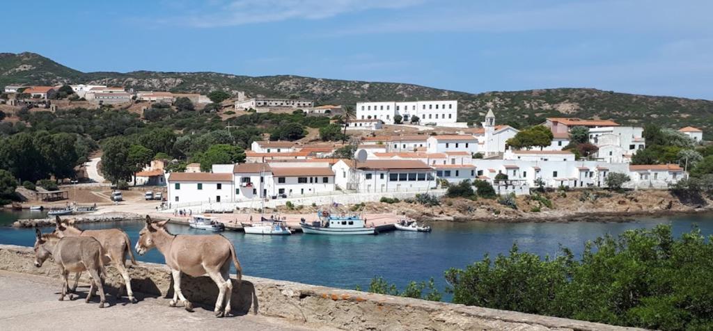 Sardegna, ex carcere Asinara diventa albergo diffuso