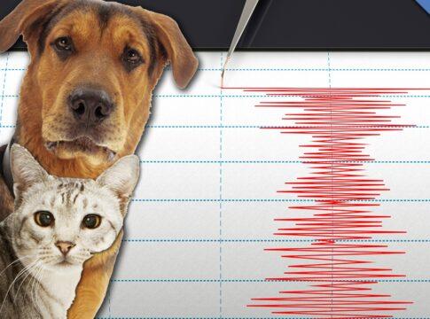 Il comportamento degli animali può aiutare a prevedere i terremoti?