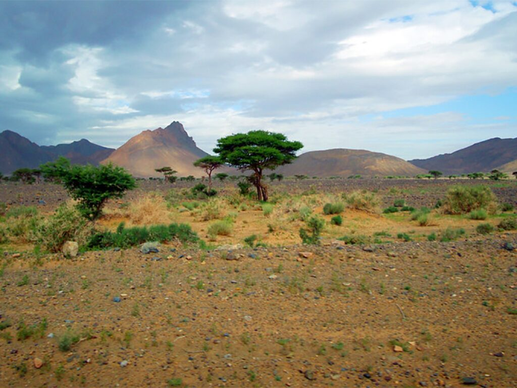 Una muraglia verde per l'Africa, The Great Green Wall