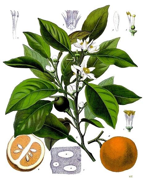 Dalle arance siciliane nascono pannelli termoisolanti